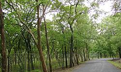 Munnar Sightseeing | Munnar Sightseeing Places to Visit | Munnar